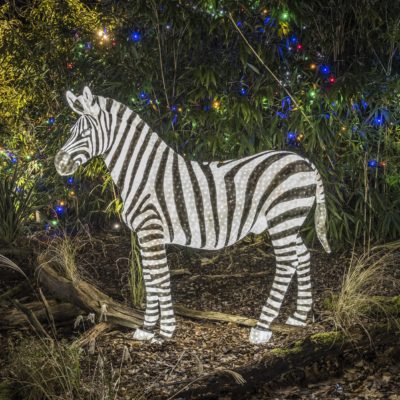 Festive Lights add to the Magic of Christmas Event at Colchester Zoo